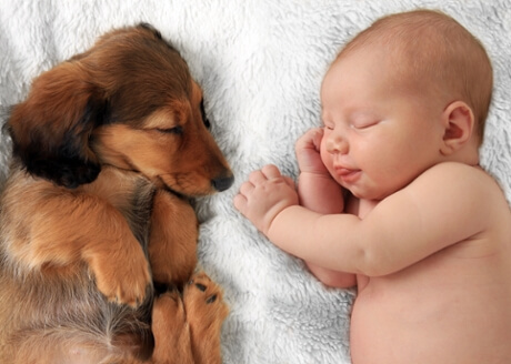 babies and pets